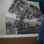 Mold Damage5