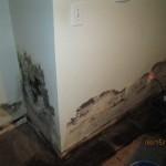 Mold Damage2