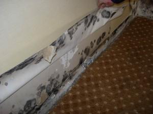 Mold Damage4