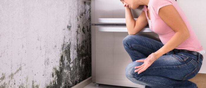 MOLD DAMAGE: Get rid of mold damage in your home, for good!